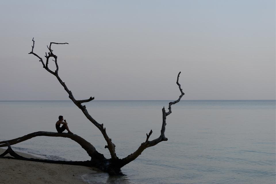 Ein Baum, ein Mann und das Meer.