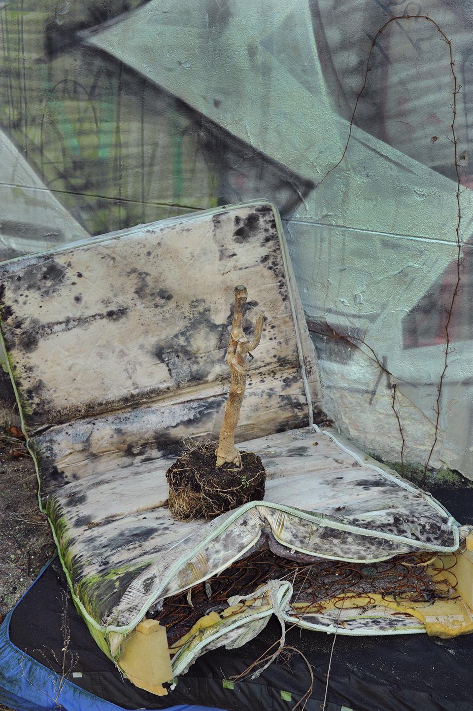 Eine Skulptur eines Astes in Mülllanschaft.