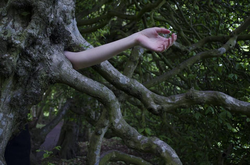 Fraunarm schiebt sich durch Luftwurzeln eines Baumes hindurch.