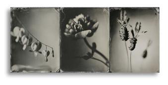 Schwarzweiße Nahaufnahme von drei Blumen nebeneinnader gestellt.