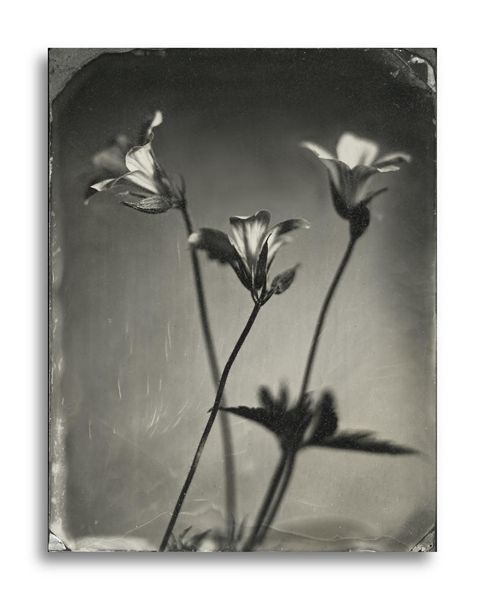 Schwarzweiße Nahaufnahme von Blumen.