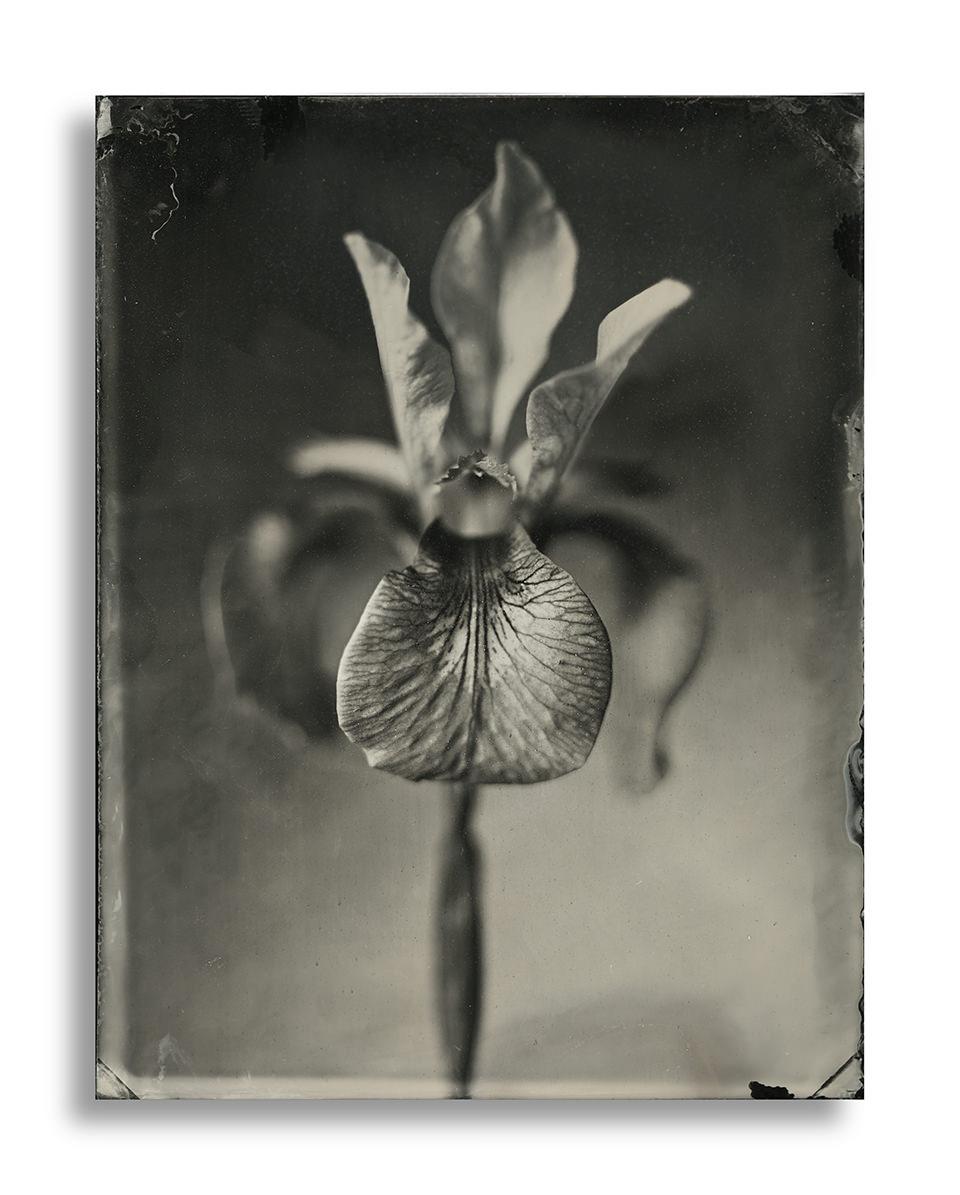 Schwarzweiße Nahaufnahme von einer Lilie.