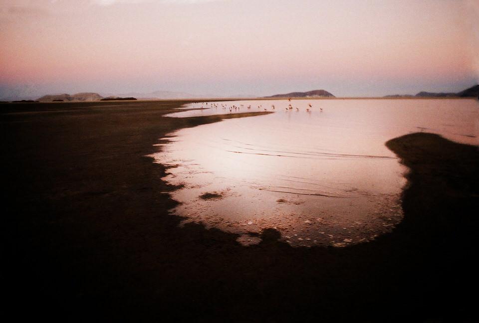 Ein Gewässer mit auffliegenden Vögeln im Sonnenuntergang.