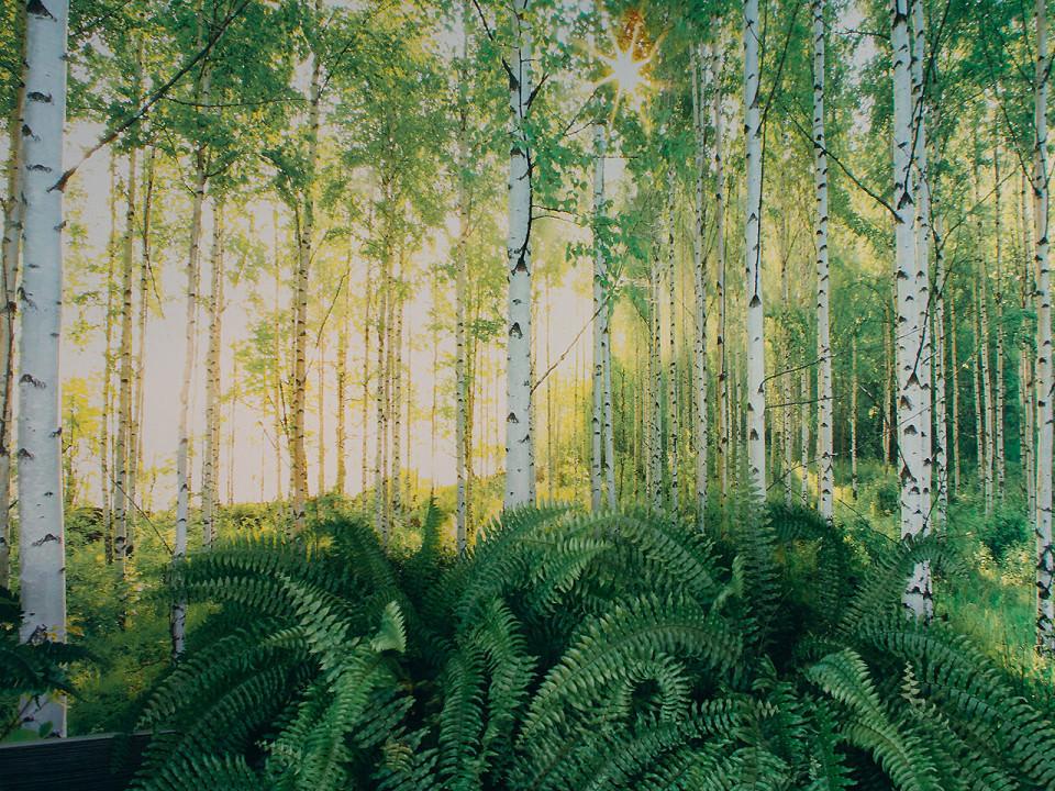 Wald und Pflanzen