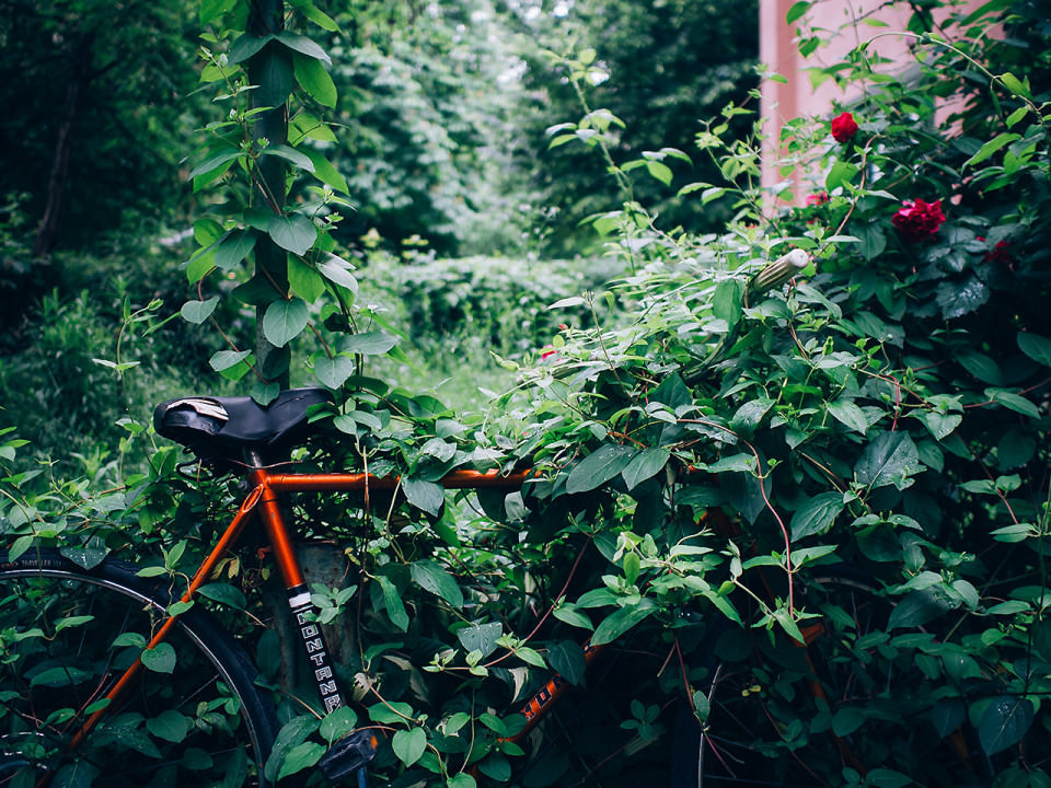 Ein Fahrrad in einer Hecke