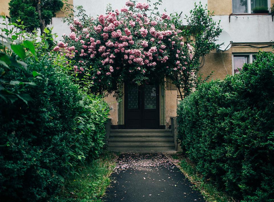Ein bewachsener Hauseingang