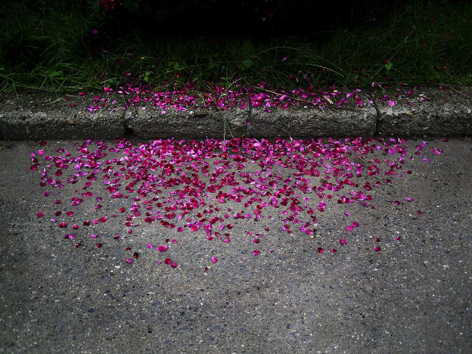 Blütenblätter auf dem Asphalt