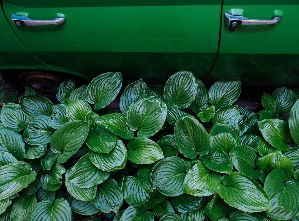 Grüne Blätter vor grüner Autotür