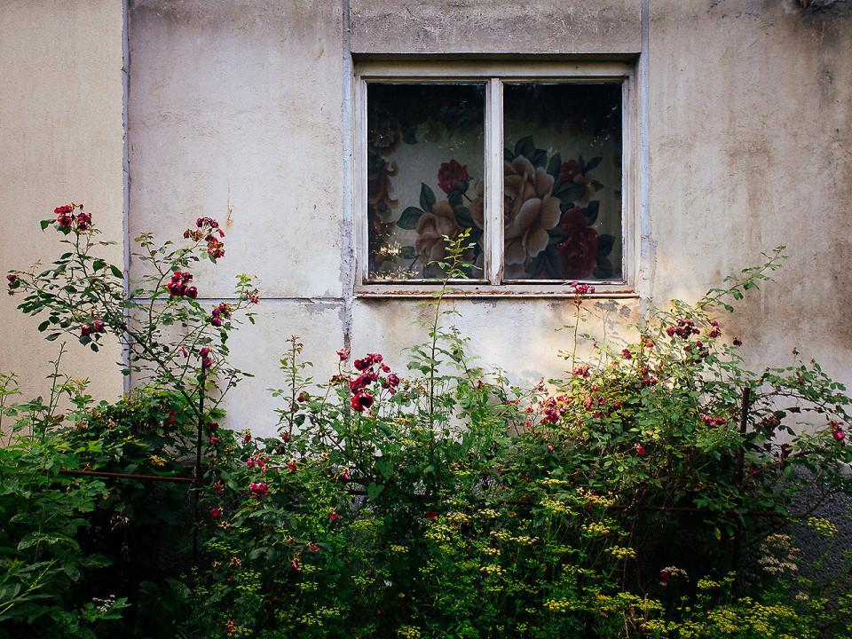 Blumen vor einem Fenster