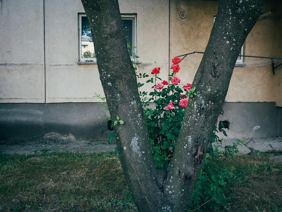 Blumen und ein Baum vor einem Haus