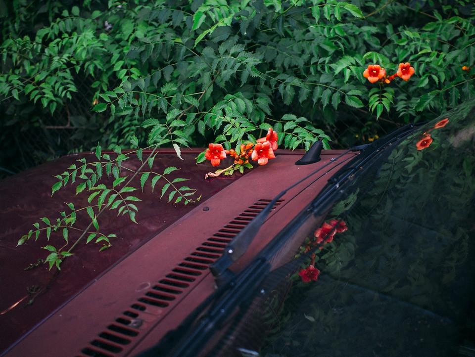 Ein Auto unter Blumen