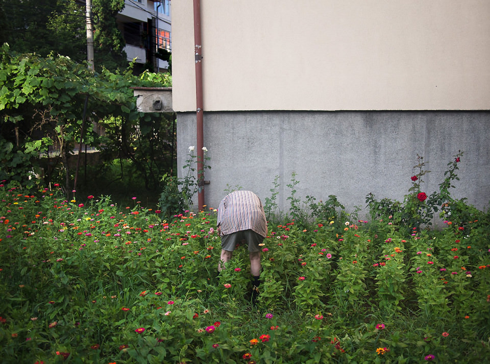 Eine Person bückt sich in einer Blumenwiese