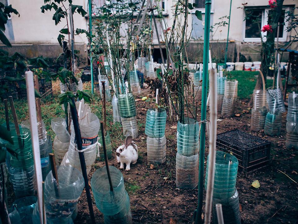 Ein Kaninchen in einem Garten
