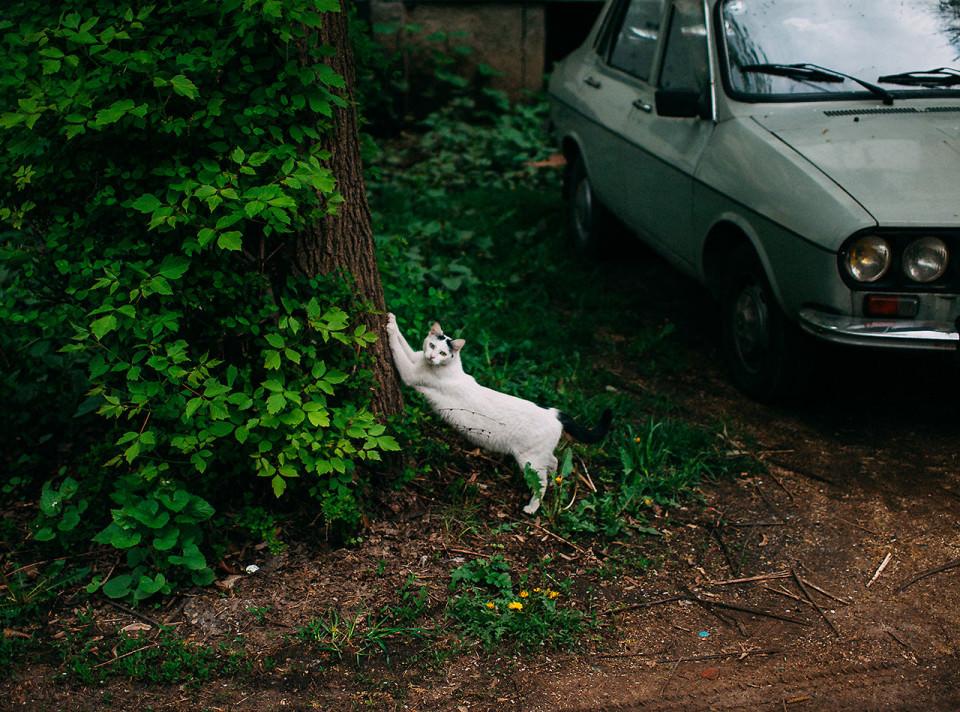 Eine Katze an einem Baum