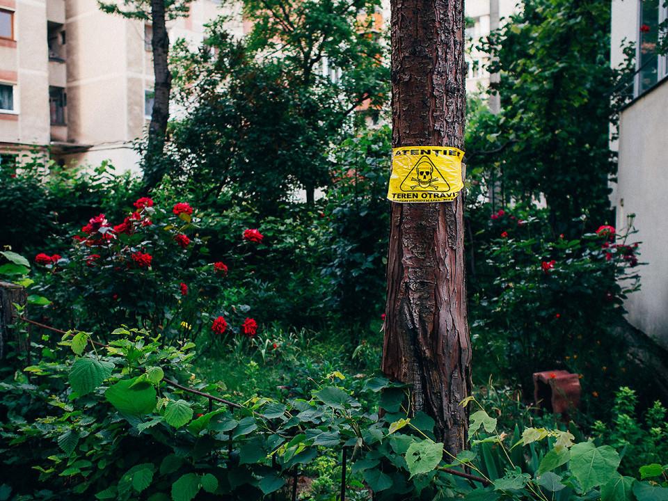 Ein Baum mit Warnhinweis