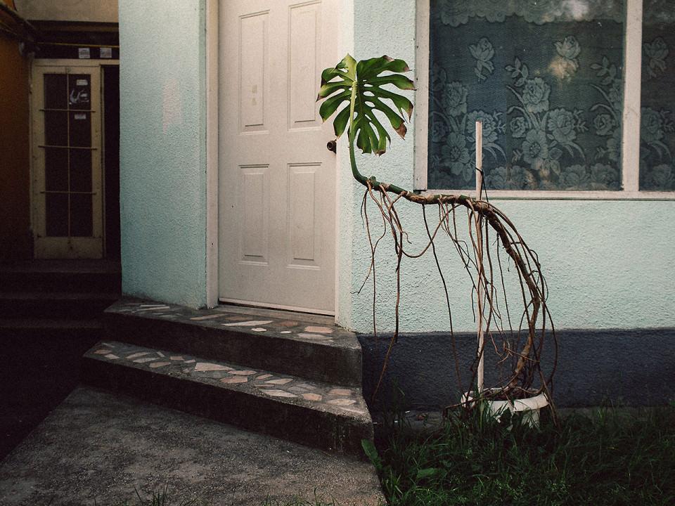 Eine Pflanze an einem Hauseingang