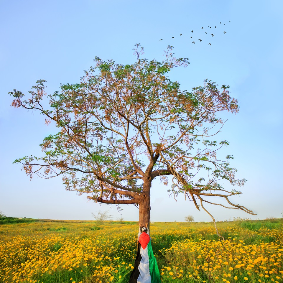 Person mit Palästinensischer Fahne vor einem Baum