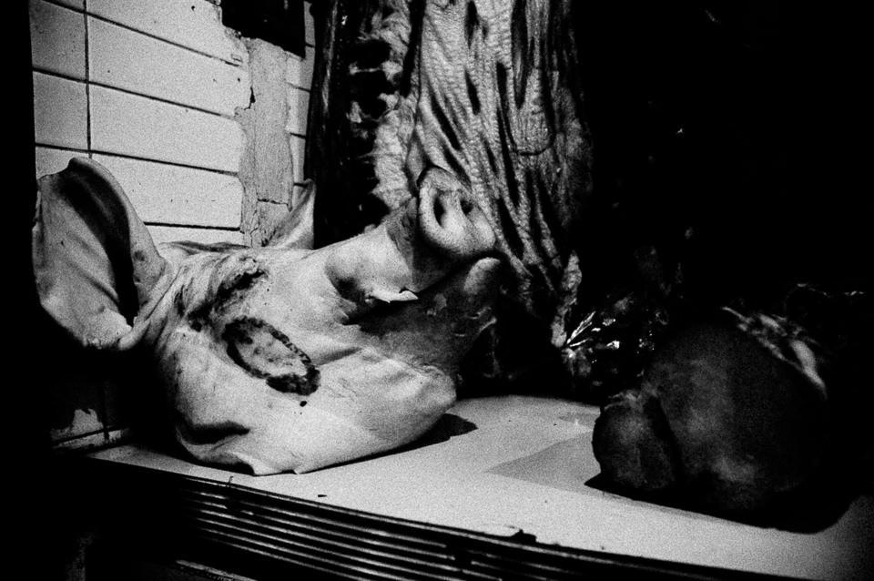 Ein Schweinskopf in der Sonne.