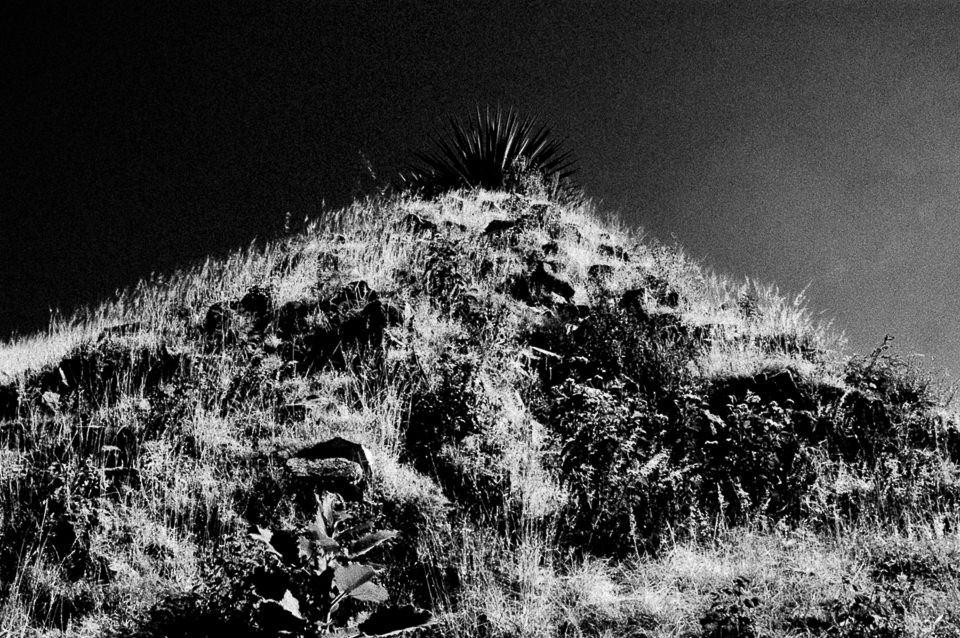 Ein Berg und oben ein Kaktus.