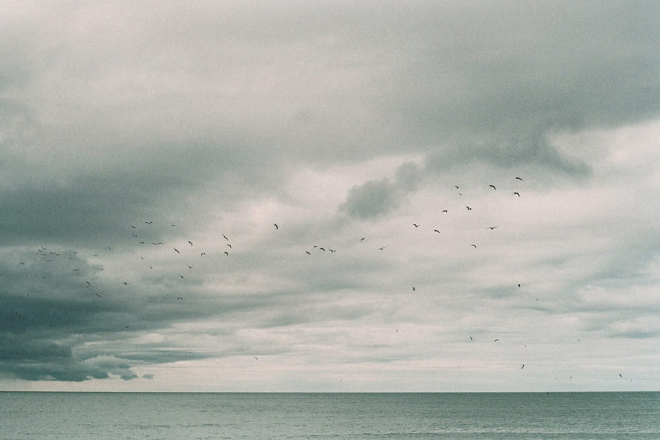 Vogelschwarm am Meereshimmel