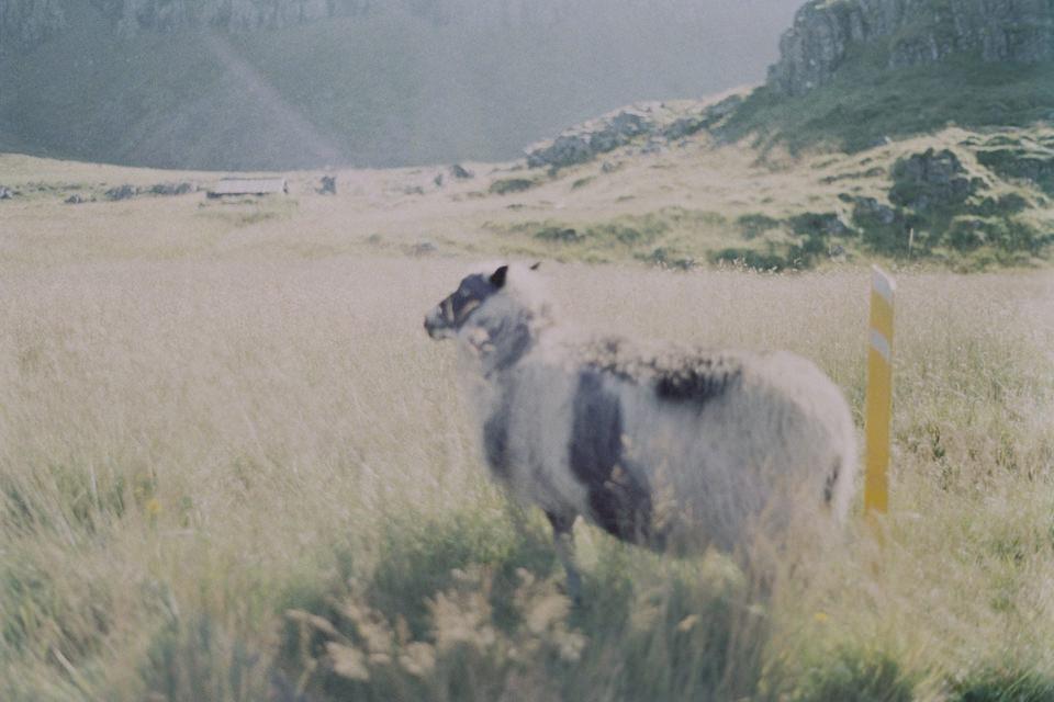 Ein Schaf steht in einer Landschaft