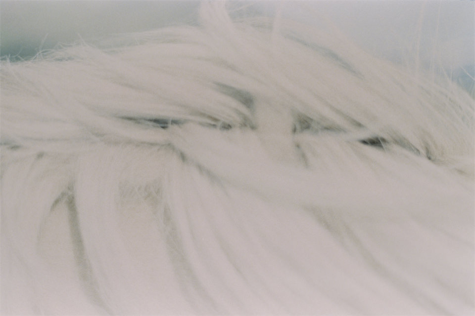 Bild von Fell eines Pferdes