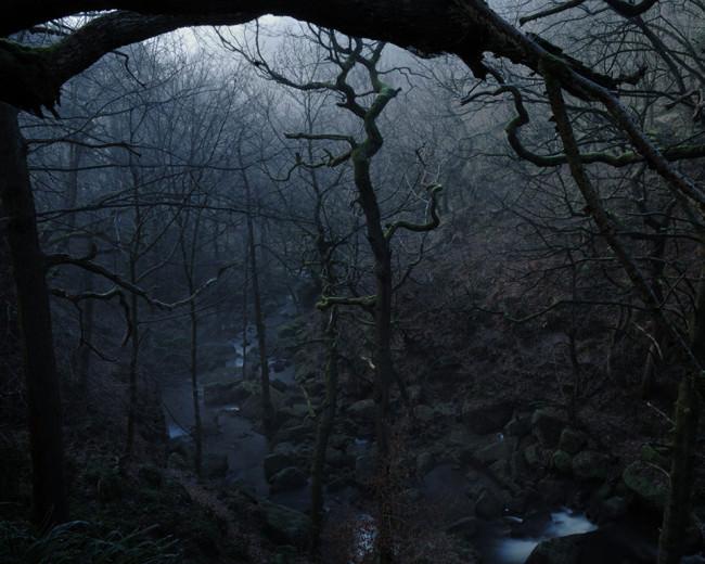 Ein verwachsener Wald wird von einem Bach durchzugen.