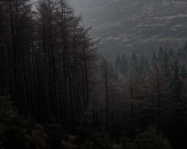 Blick in einen düsteren Wald.