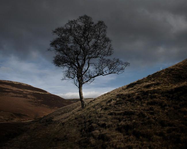 Ein Baum steht auf einem Feld, bewölkter Himmel.