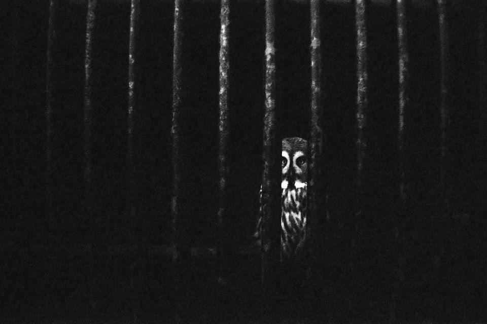 Eule hinter Gitterstäben, schwarzweiß.