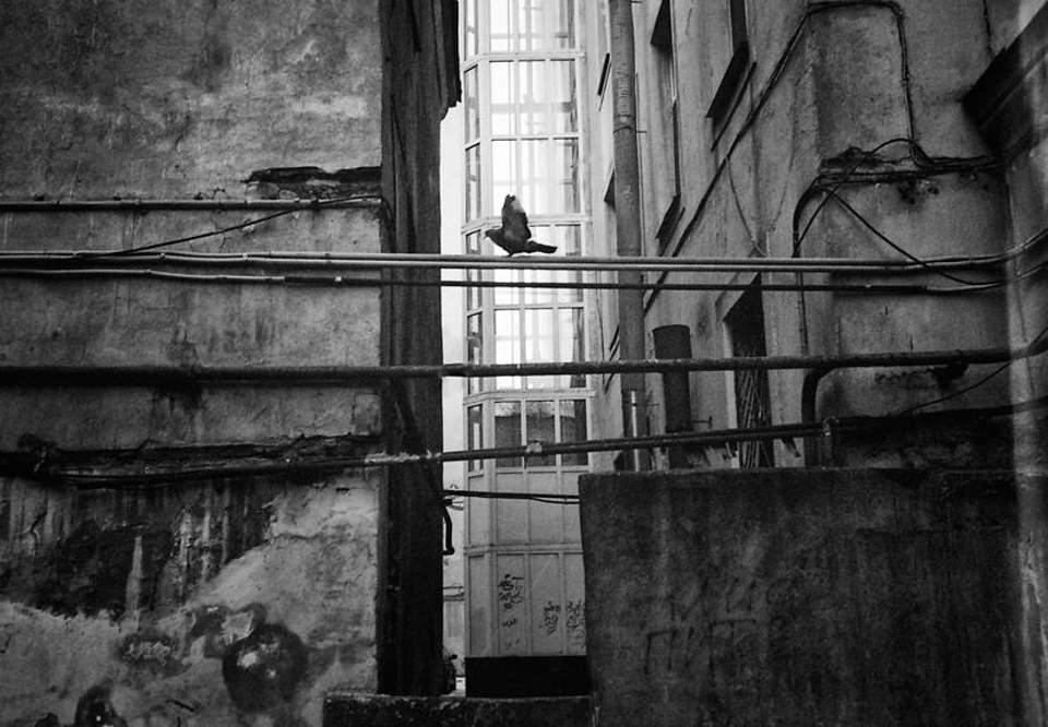 Tauben sitzen zwischen zwei Häusern.