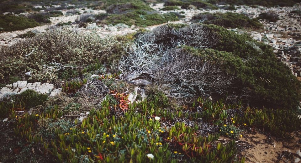 Details von bodennahen Pflanzen.