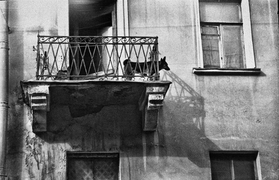 Ein Hund steht auf einem Balkon.
