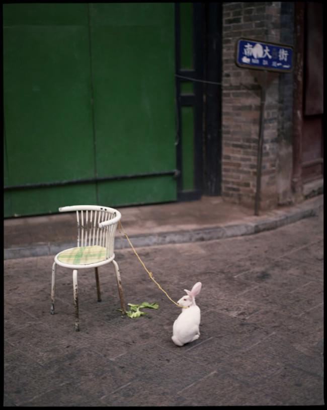 Ein an einem Stuhl angebundenes Kaninchen