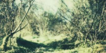 Gestrüpp und Gras im Sonnenlicht.