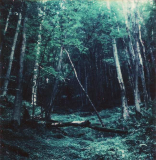 Blick in einen mossigen, grünen Wald.