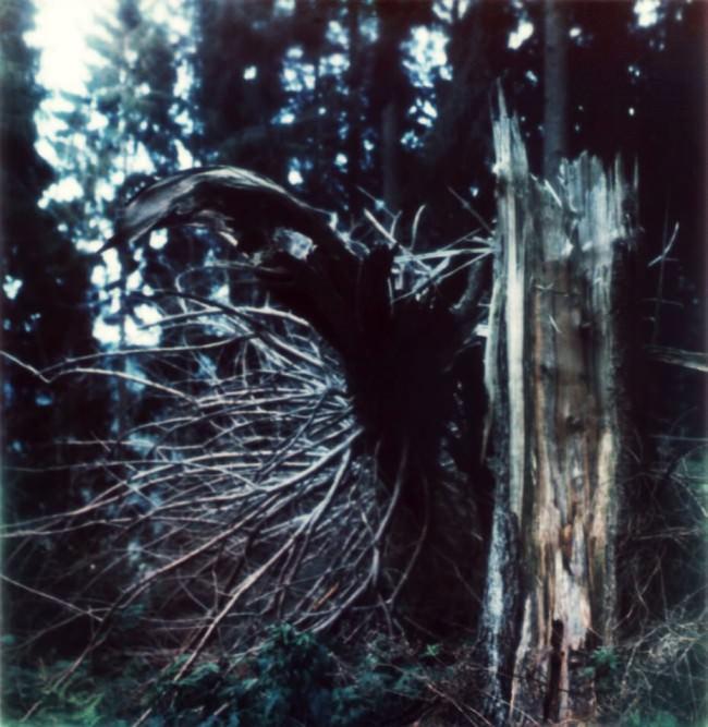 Umgebrochener Baum neben seinem Stamm im Wald.