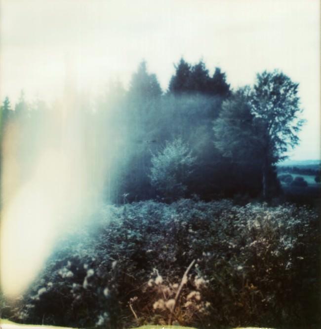 Lichtreflex vor einem Wald hinter einem Feld voller Gestrüpp.