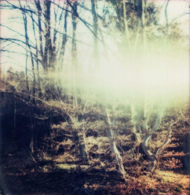 Lichtreflex vor einigen Bäumen in rotem Laub.