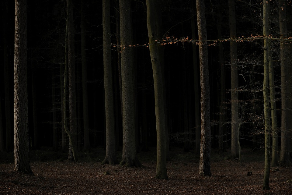 Sehr dunkler Buchenwald.
