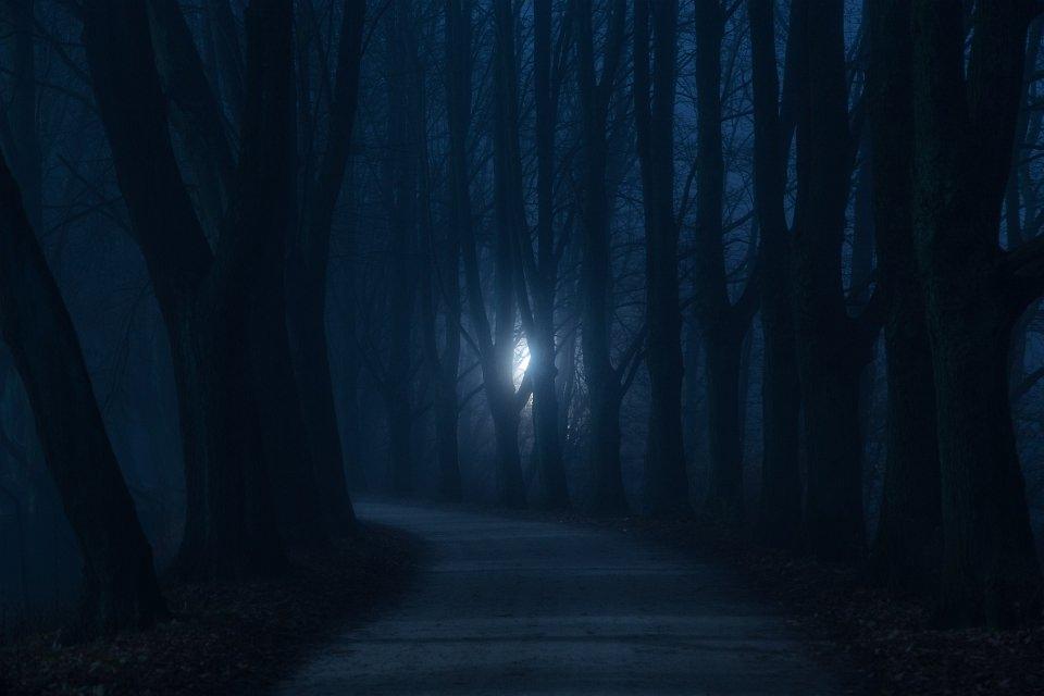 Holzpfad durch einen sehr dunkelblauen Wald, in der Ferne ein Licht zwischen den Bäumen.