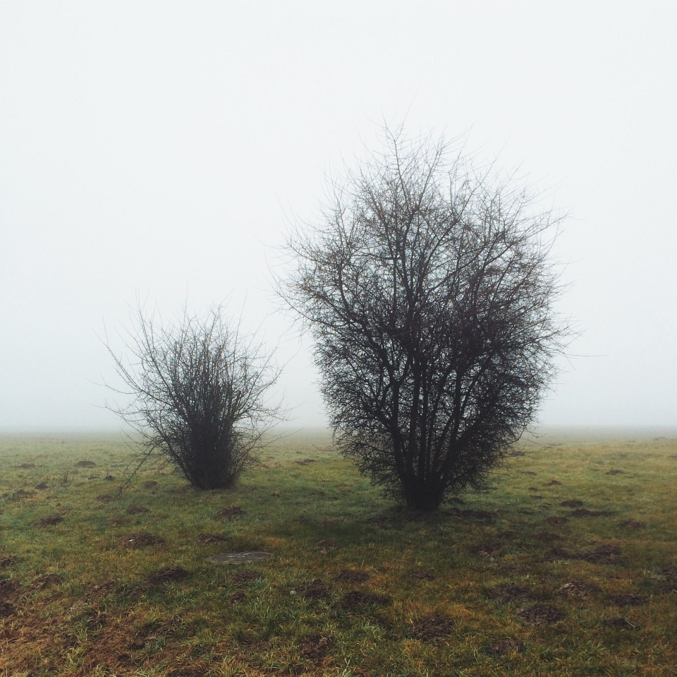 Zwei blattlose Büsche stehen auf einem nebligen Feld.
