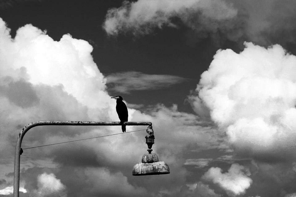 Ein Vogel auf einem Mast.