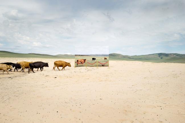 Eine Herde Vieh zieht über eine Sandebene