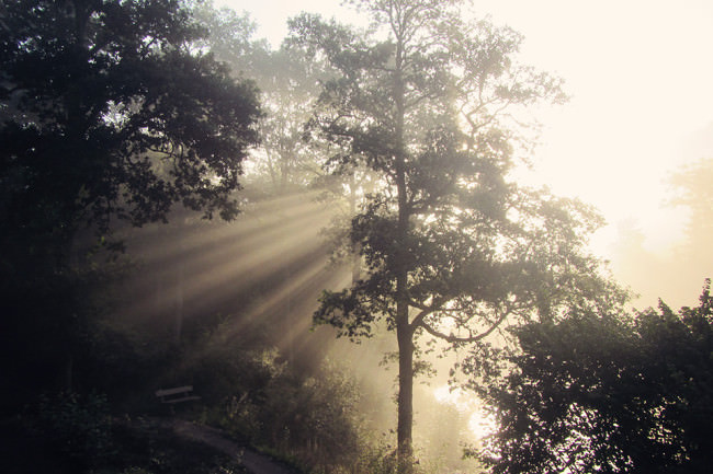Sonnenstrahlen zwischen den Baumkronen.