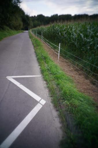 Straßenmarkierung neben einem Zaun
