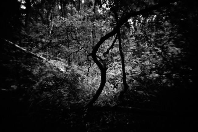 Äste im Wald