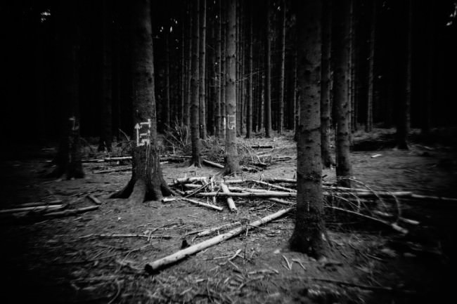 Bäume und Äste im Wald