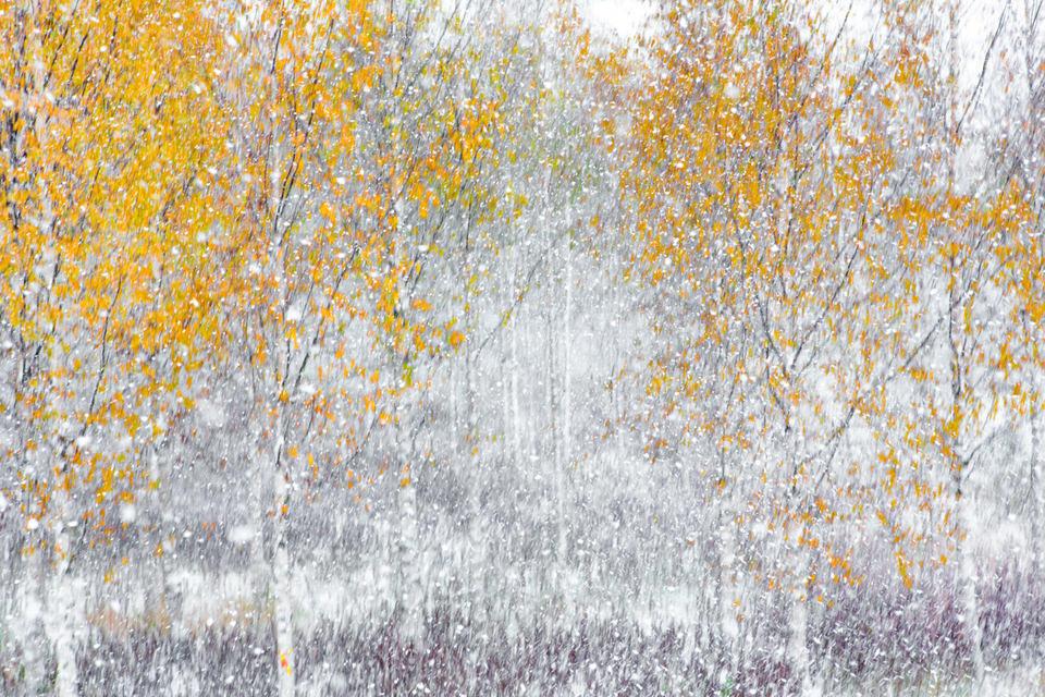 Bäume im fallenden Schnee
