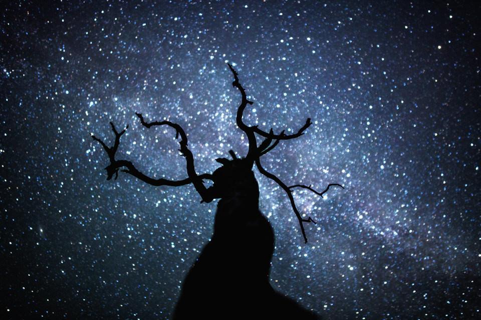 Ein Baum vor dem Sternenhimmel